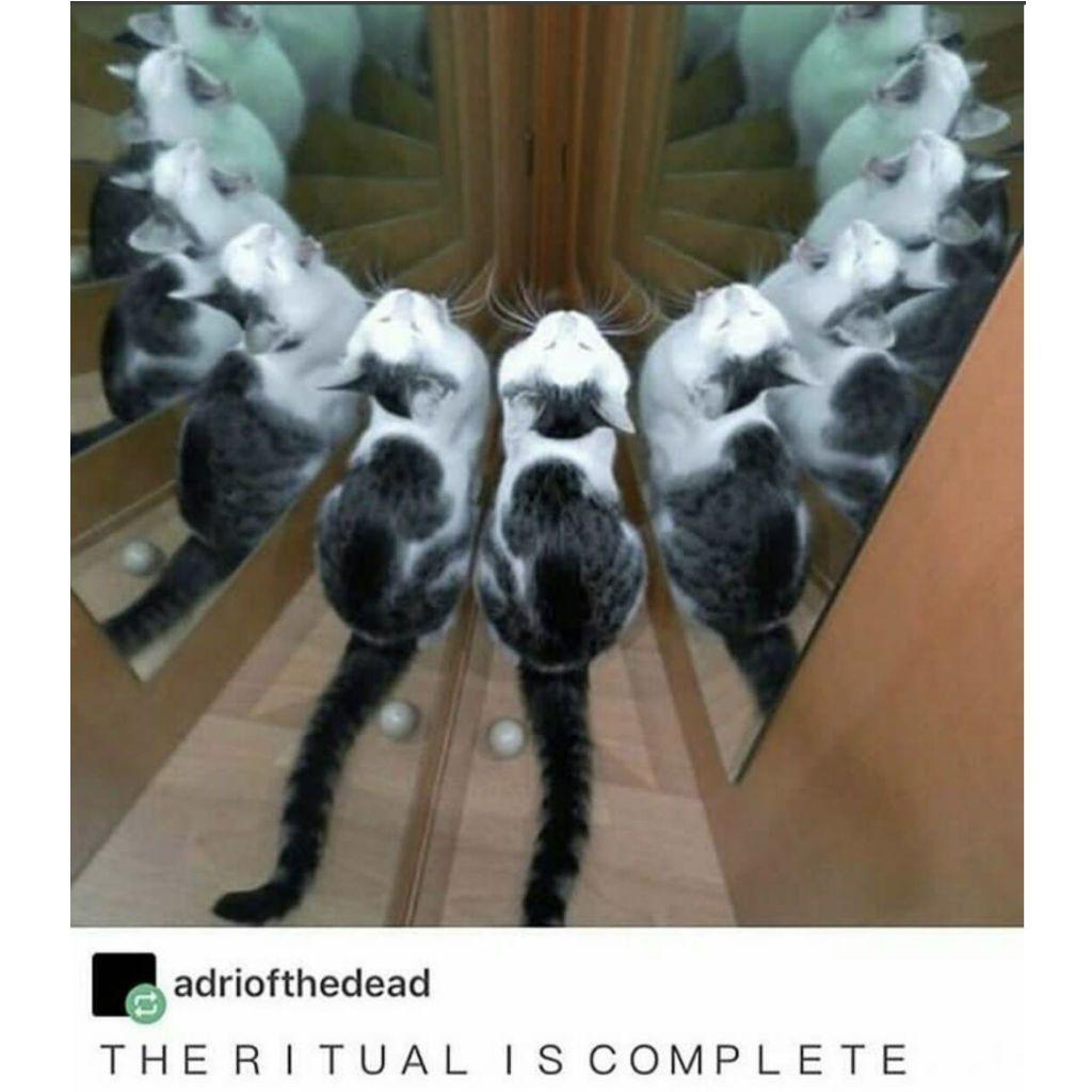 boisterous Cat Memes