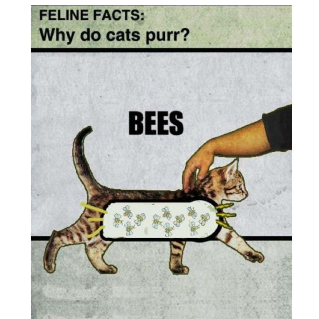 cheerful Cat Memes