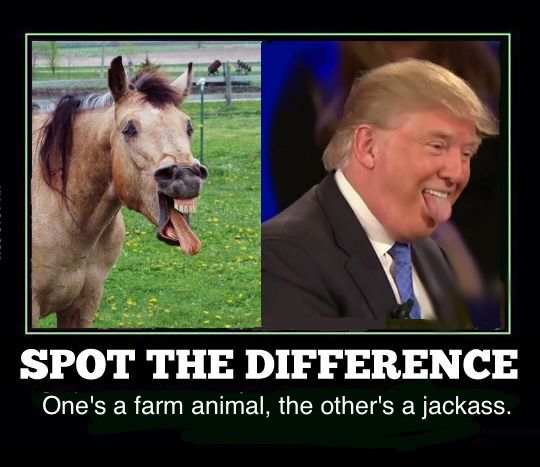 comical Trump Memes