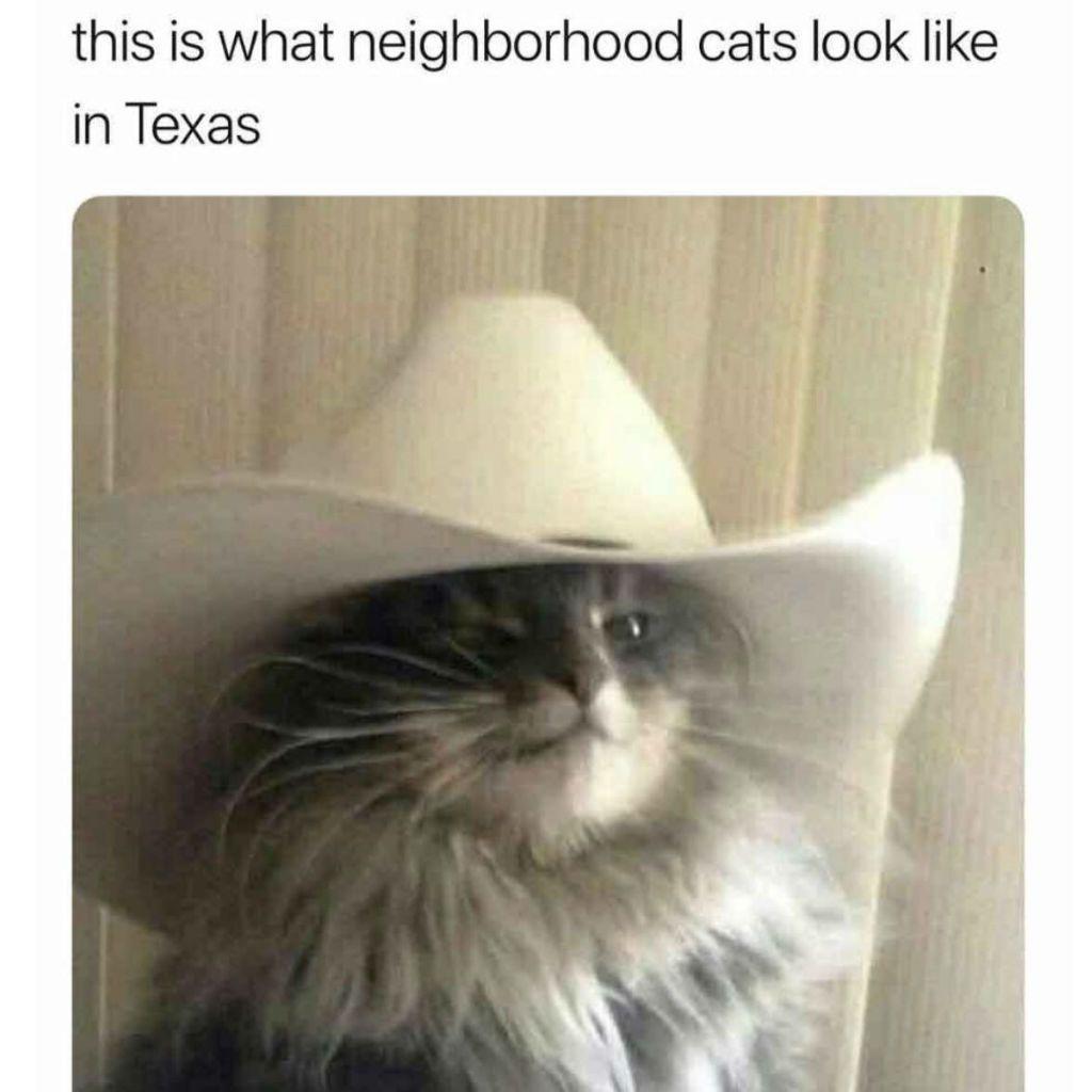 entertaining Cat Memes