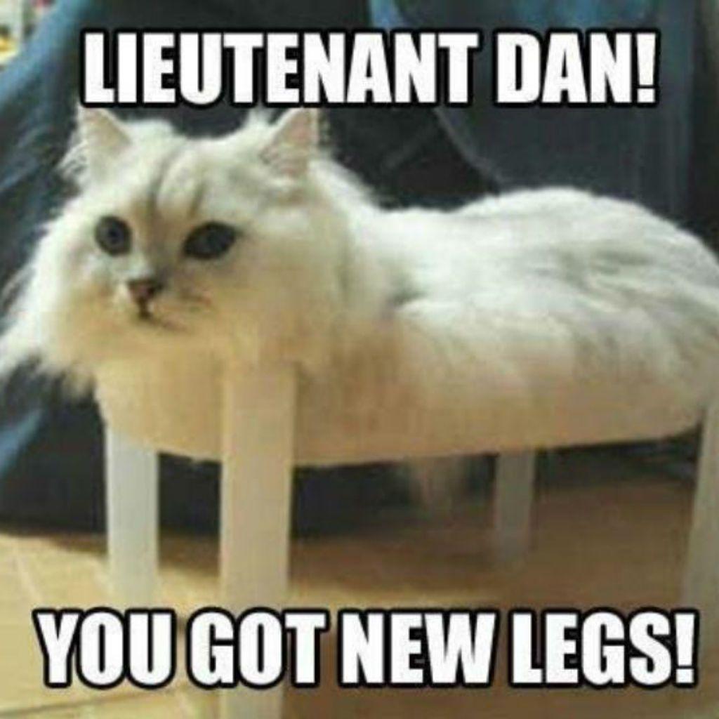 hysterical Cat Memes