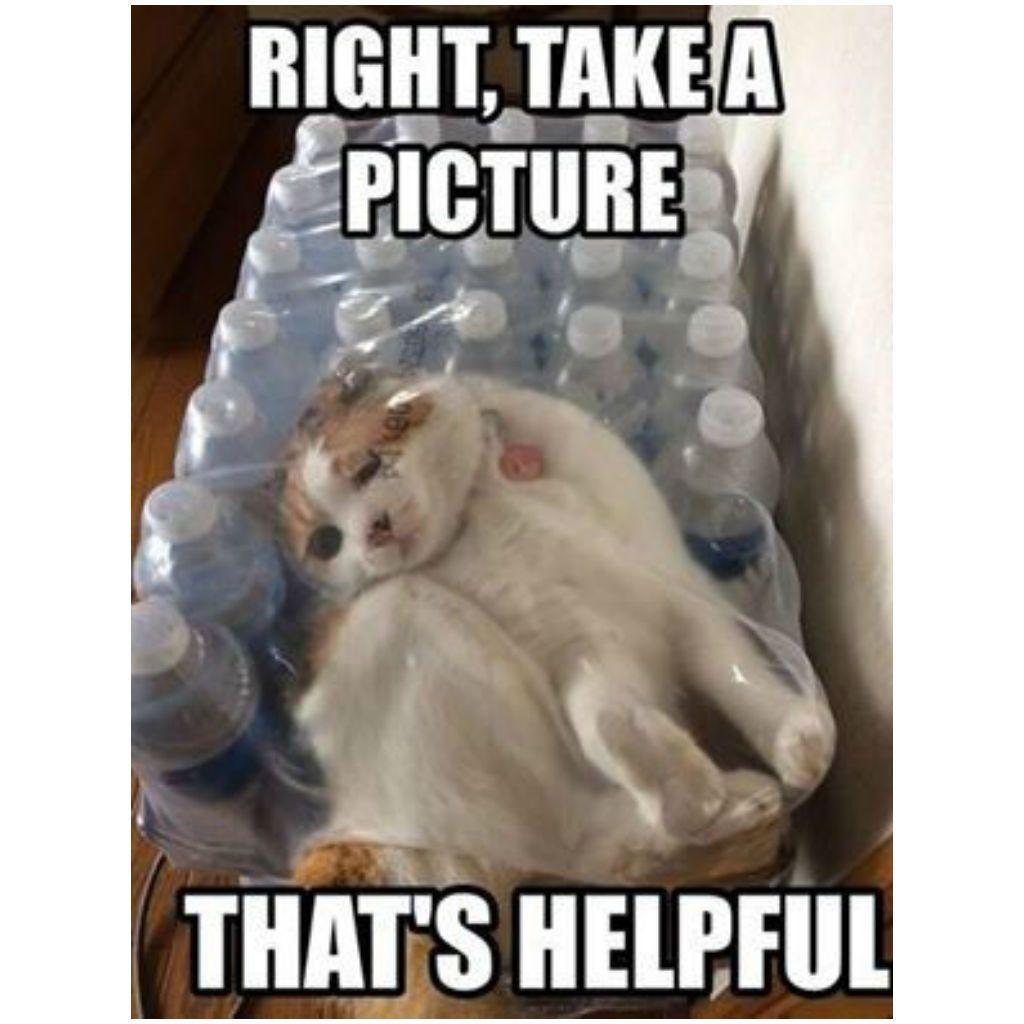 lively Cat Memes