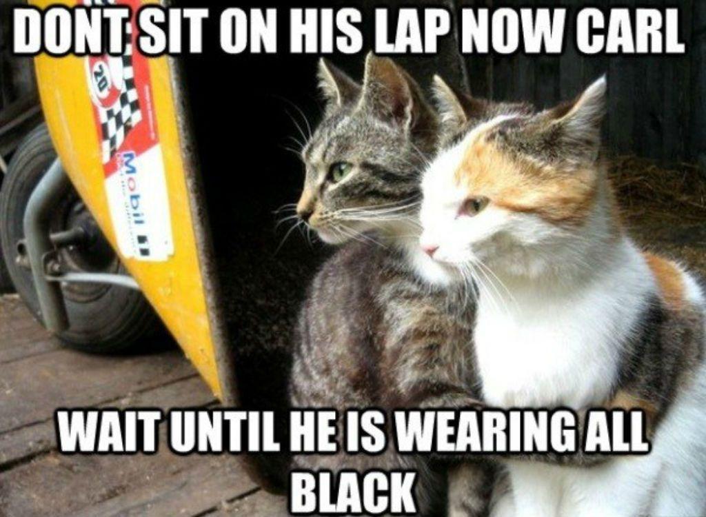 noisy Cat Memes