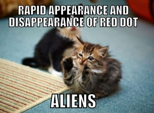 100 Funny Cat Memes That Will Make You Laugh