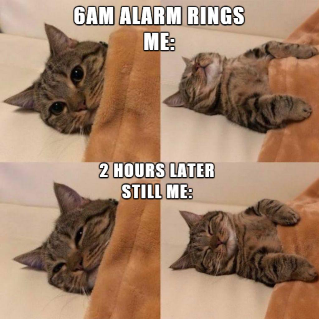 amusing Cat Memes