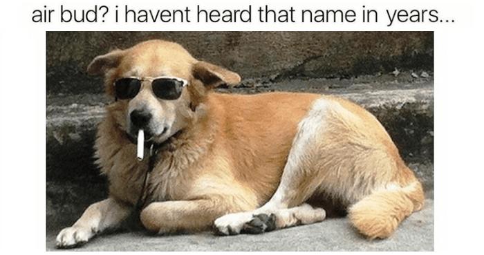 amusing Dog Memes
