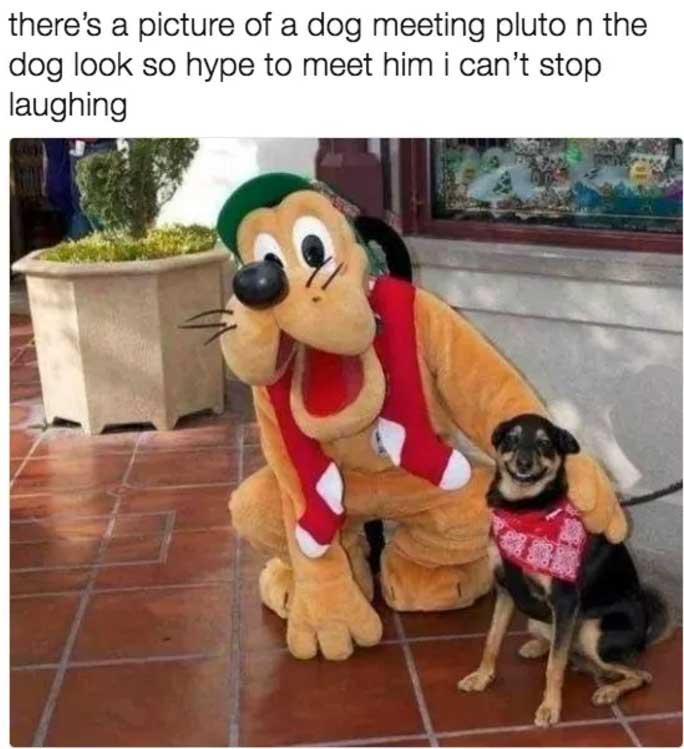 animated, Dog Memes