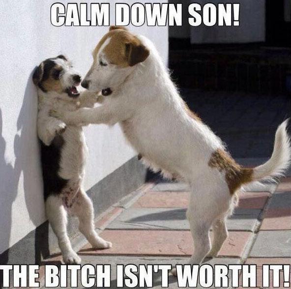 cheerful Dog Memes