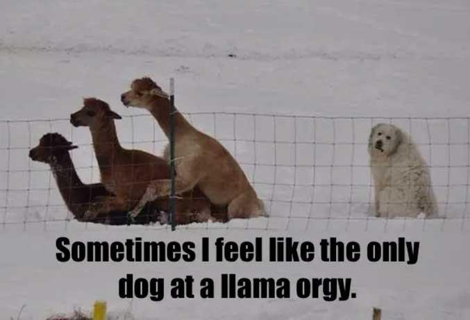 comic Dog Memes