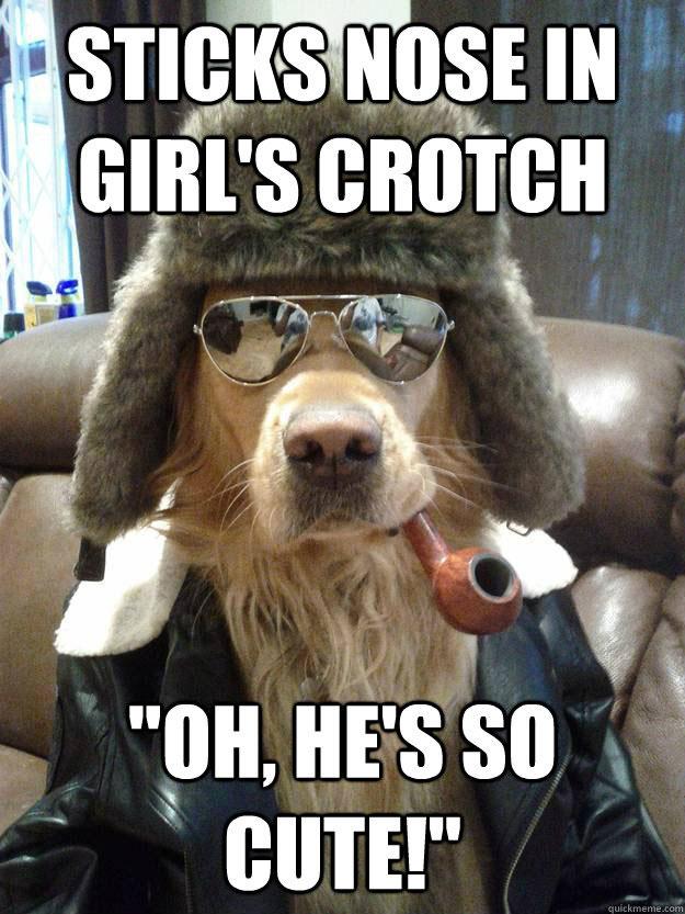 comical Dog Memes