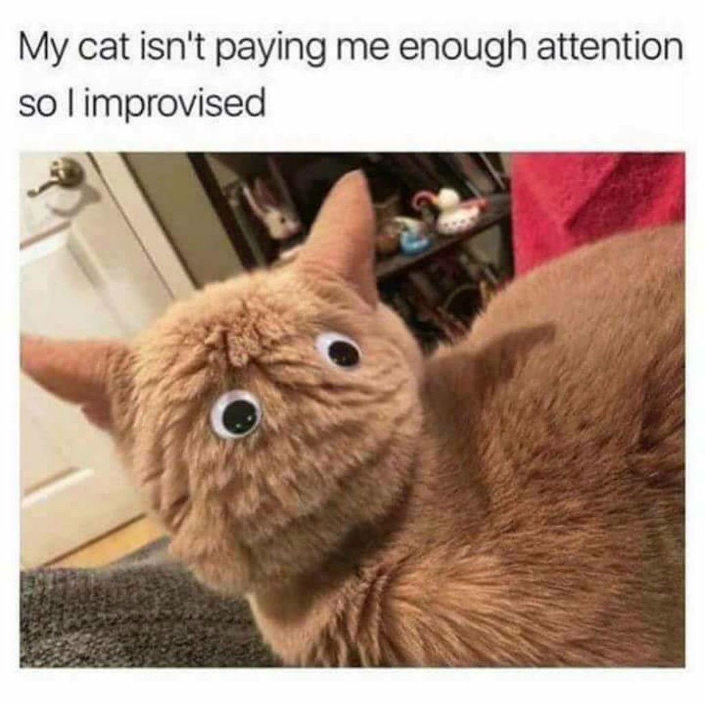 droll, Cat Memes