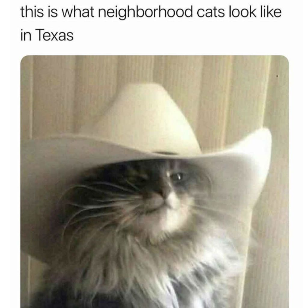 entertaining Cat Memes