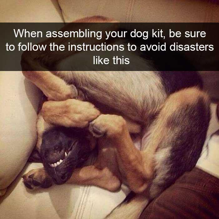 farcical Dog Memes