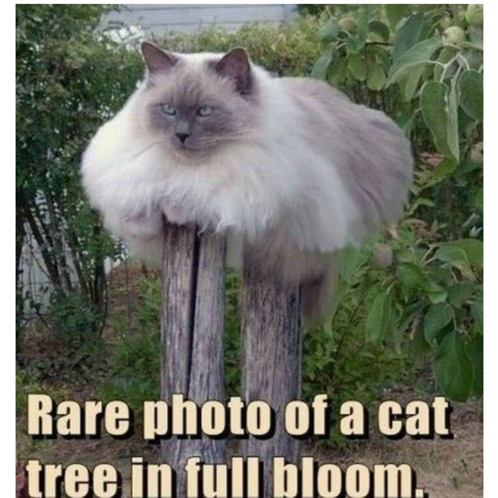 high-spirited Cat Memes