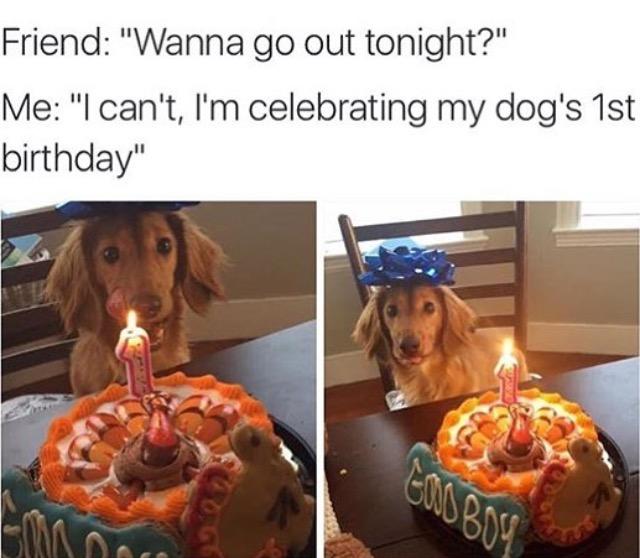 high-spirited Dog Memes