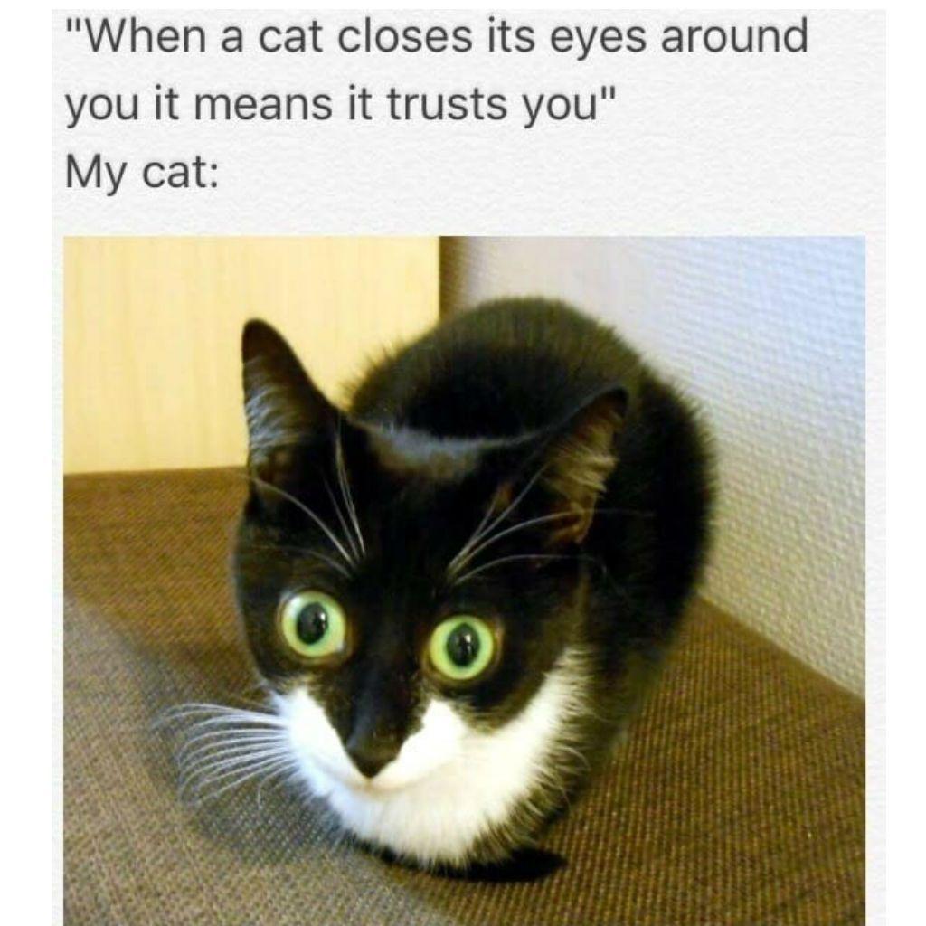 humorous Cat Memes