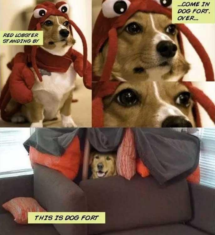 humorous Dog Memes