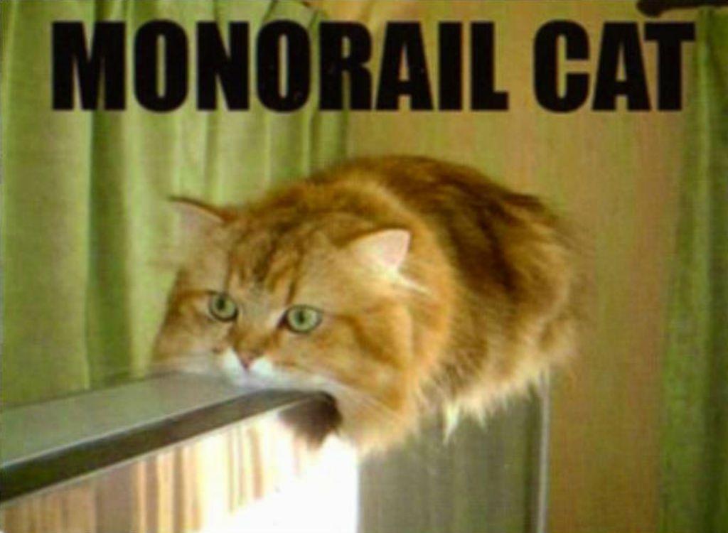 jocular Cat Memes