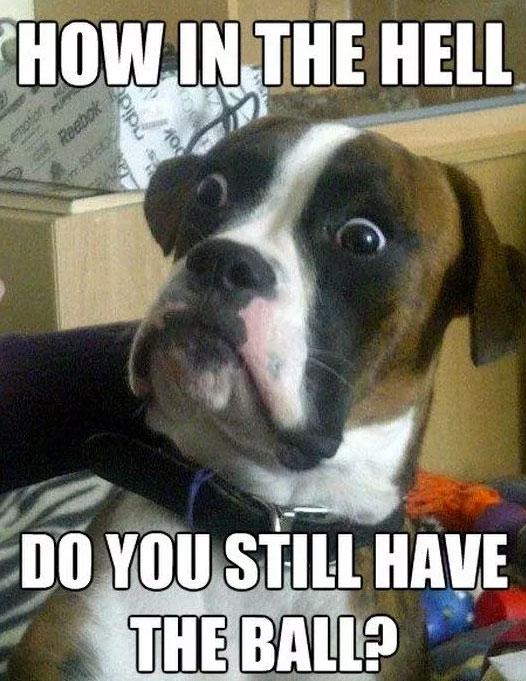 jolly Dog Memes