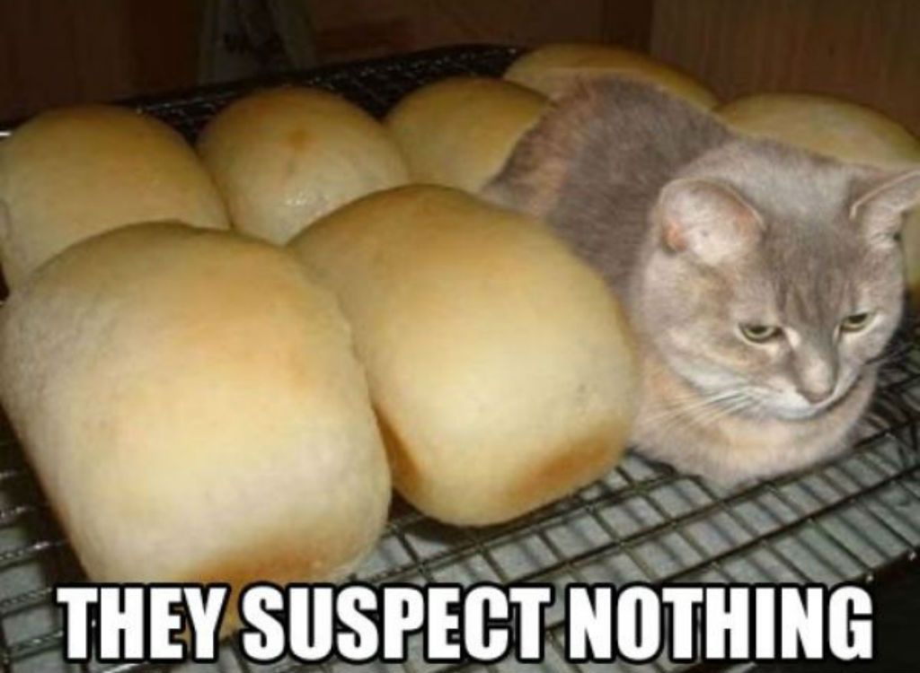 jovial Cat Memes