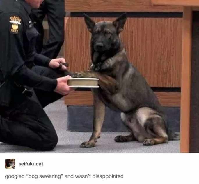 jovial Dog Memes