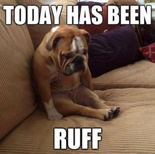 lively Dog Memes