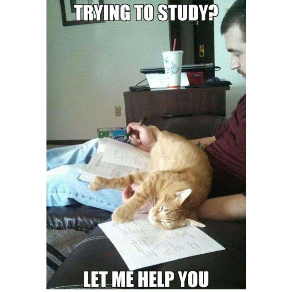 merry Cat Memes