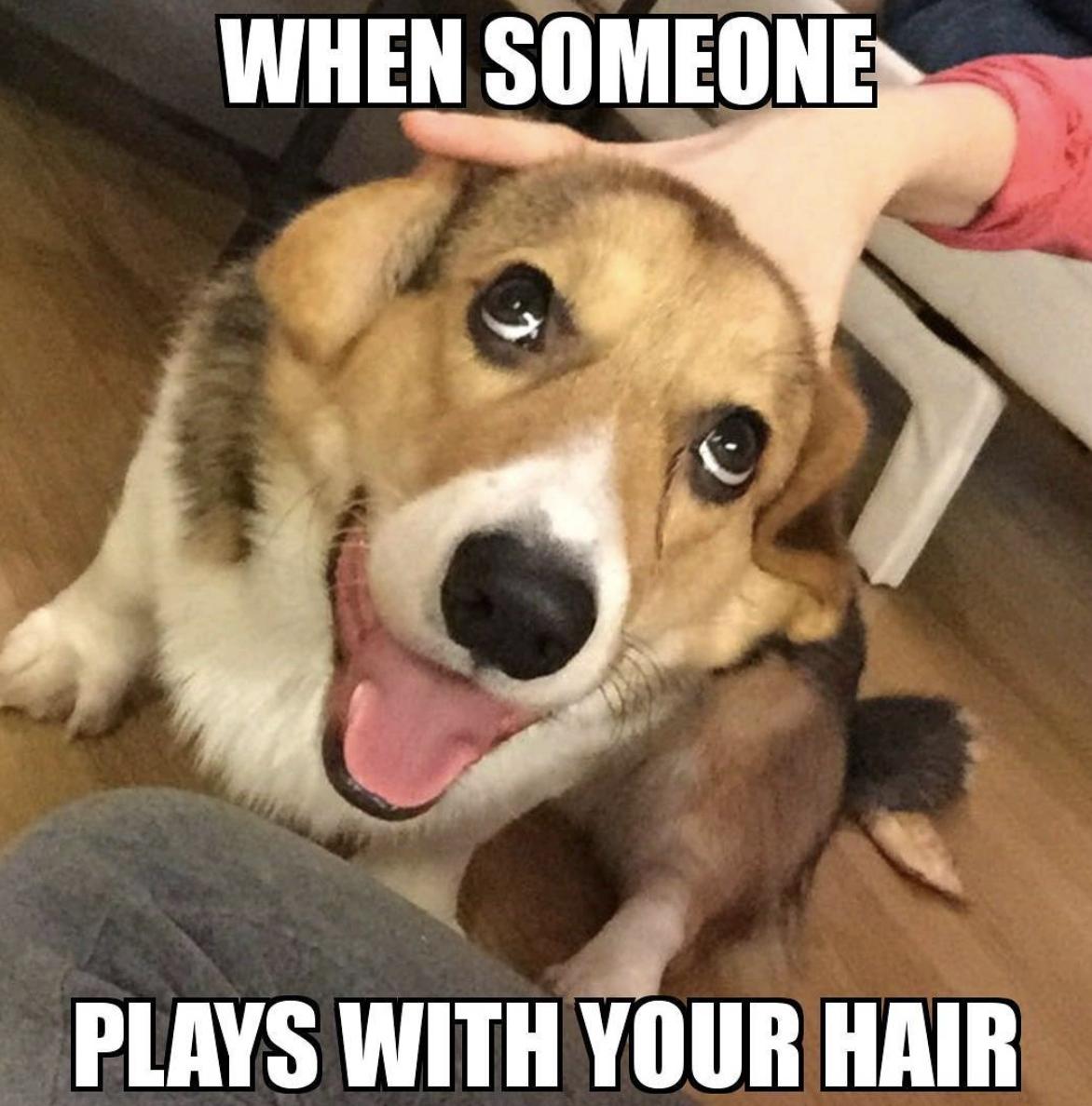 rib-tickling Dog Memes