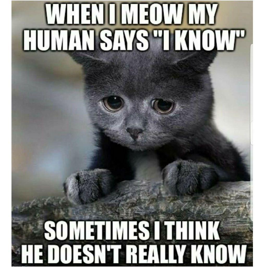 riotous Cat Memes