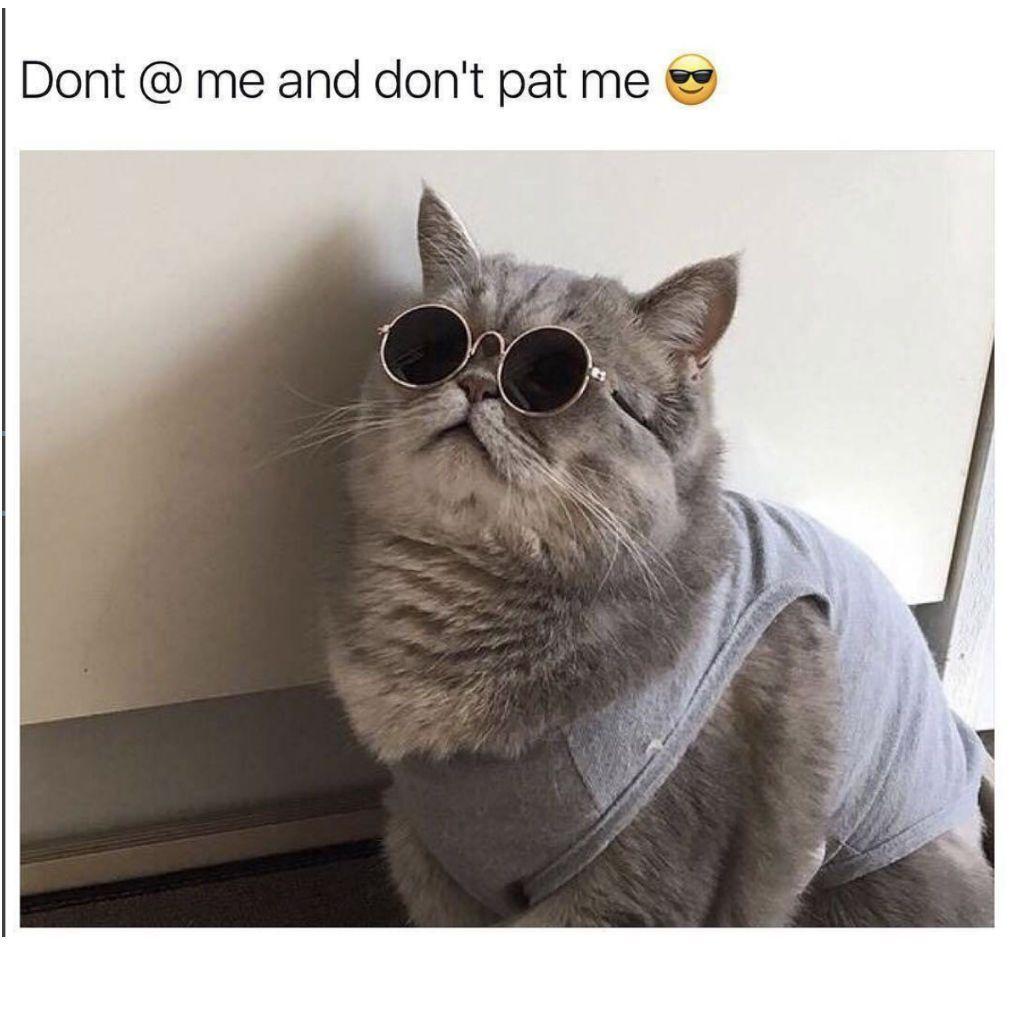 rowdy Cat Memes