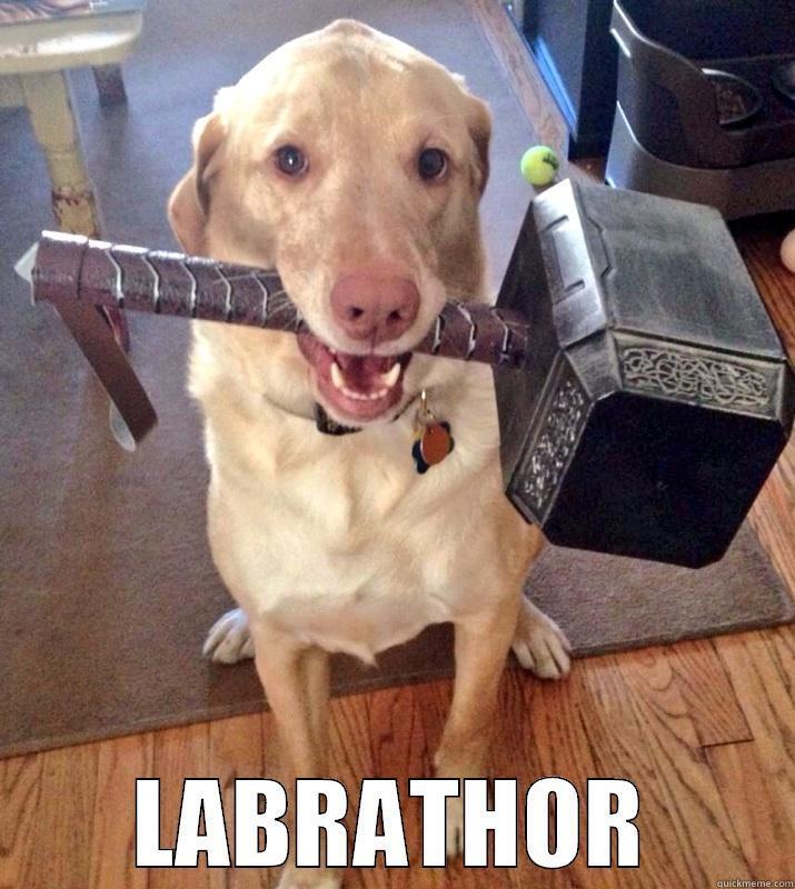 side-splitting Dog Memes