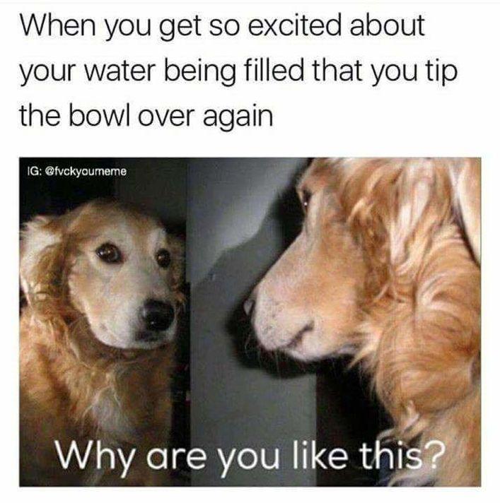 vivacious Dog Memes