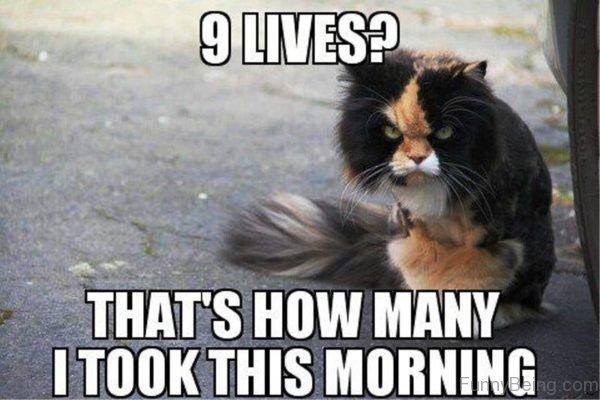 Funny Good Morning Memes