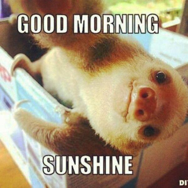 high-spirited Good Morning Memes