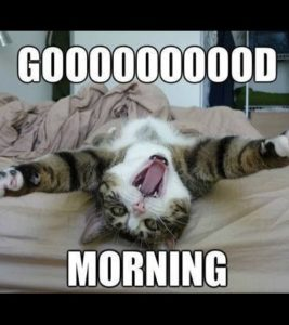 jolly Good Morning Memes