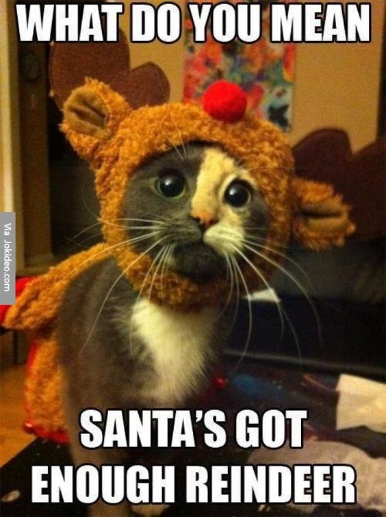Funny Christmas Memes 2019.100 Funny Christmas Memes That Will Make Go Crazy Laughing