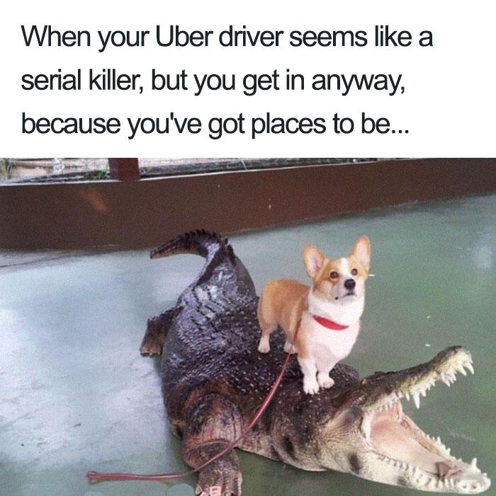 sparkling Uber Memes