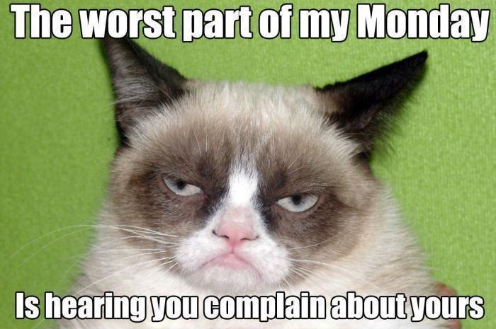 100 Funny Grumpy Cat Memes About The Famous Internet Feline