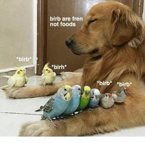 Funny birb memes