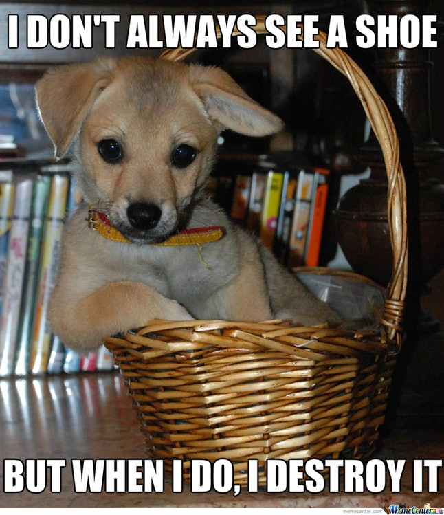 Funny puppy memes