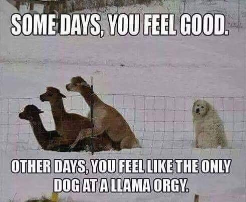 Hilarious Furry memes