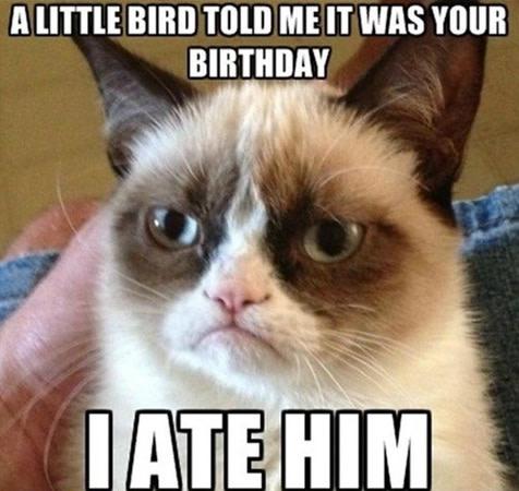 Hilarious Grumpy cat memes