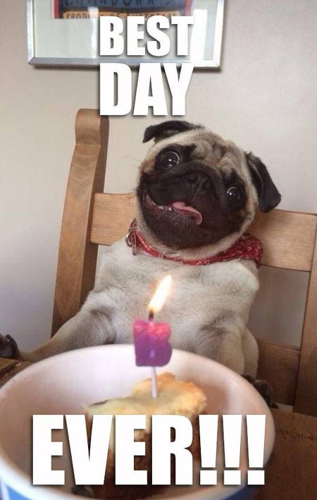 Hilarious Pug memes