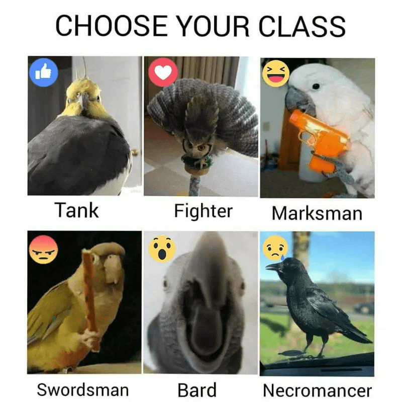 Hilarious birb memes