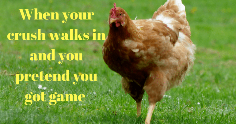 Hilarious chicken memes