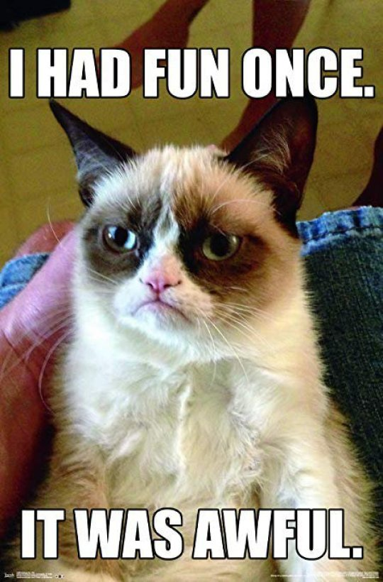 100 Funny Grumpy Cat Memes About The Famous Internet Feline
