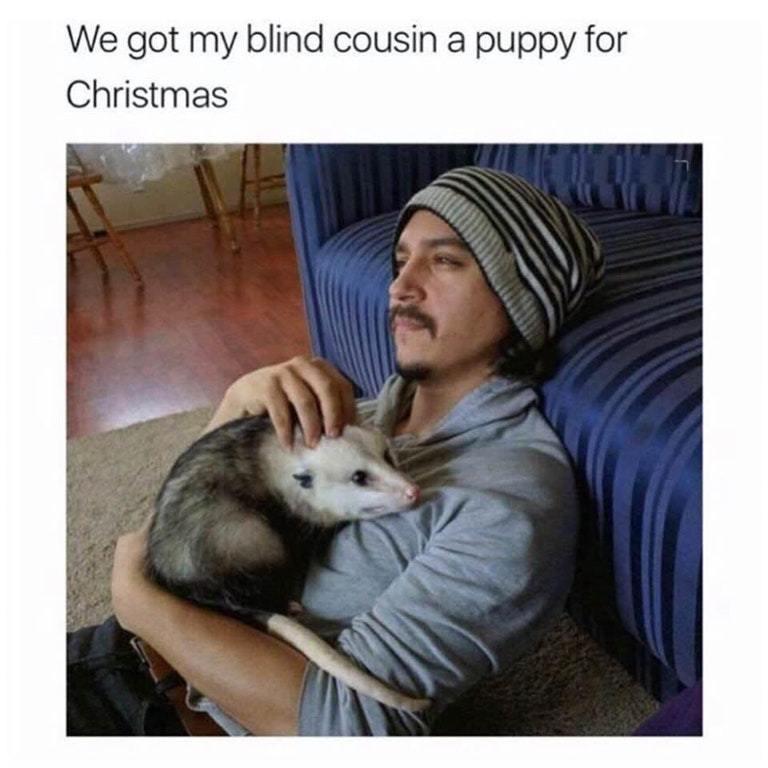 amusing puppy memes