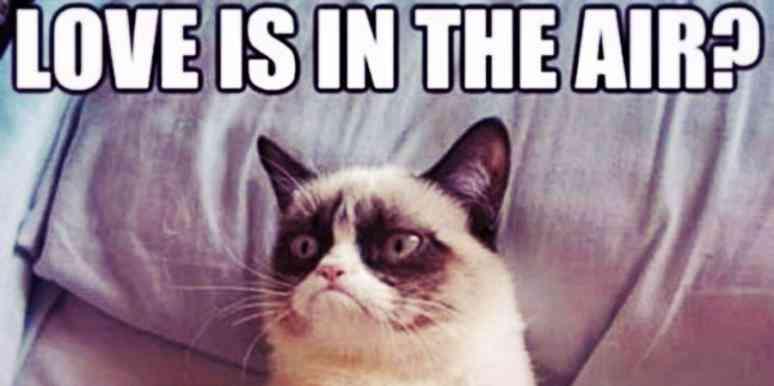 animated Grumpy cat memes