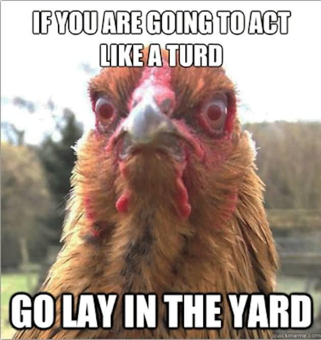 animated chicken memes