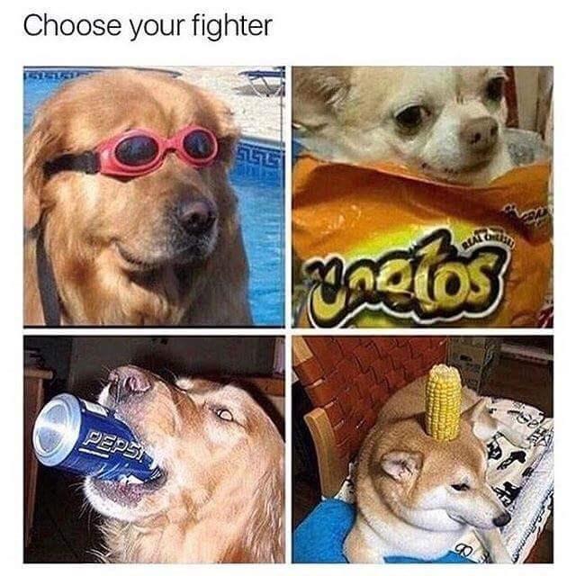 cheerful Animal memes